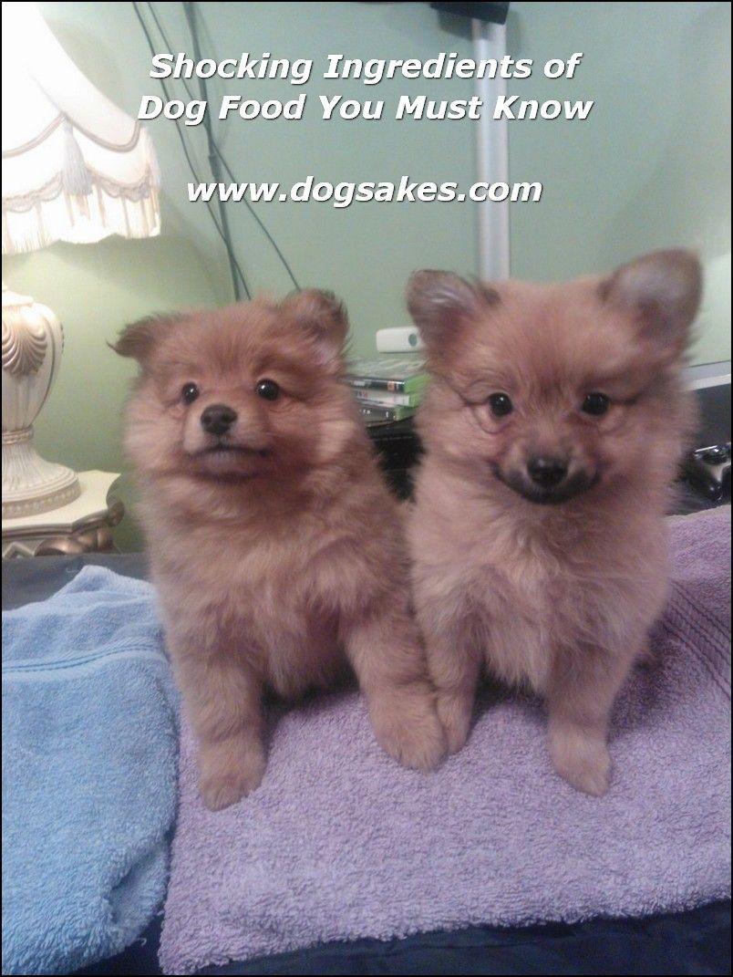 Info's : Dogs Training Concept - Dog Sakes