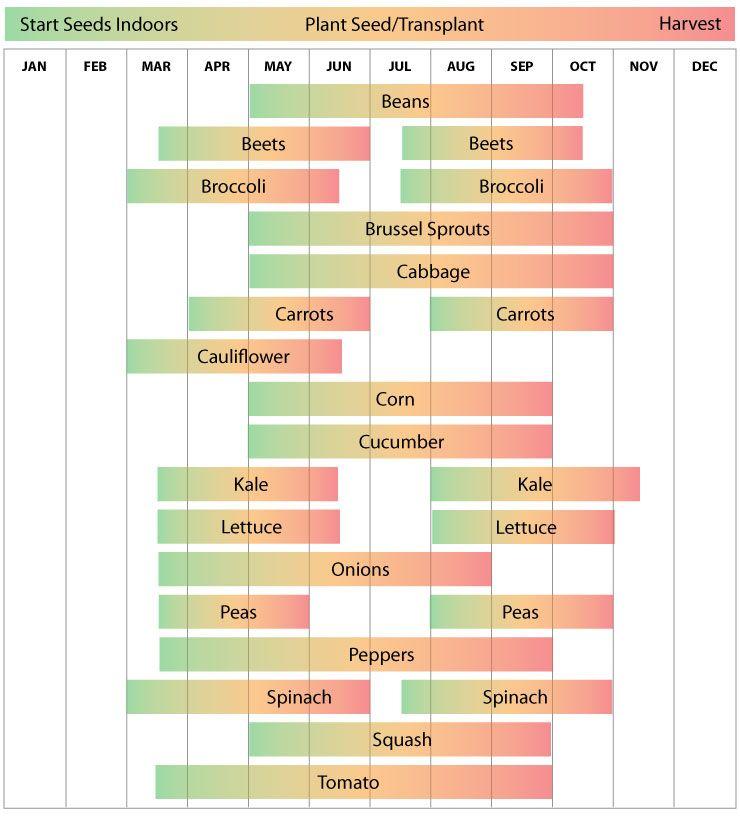 Veg Garden Fall Vegetables: Zone 6 - Vegetable Planting Calendar Guide