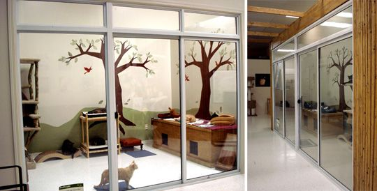 cat room love the mural and the glass doorwindow for keeping them out - Cat Room Design Ideas