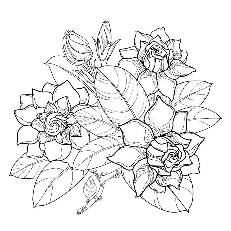 Vector Outline Gardenia Flower Bunch Bud And Ornate Leaves In Black Isolated On White Background Bouquet With Tropic In 2020 Trendy Flowers Bunch Of Flowers Gardenia