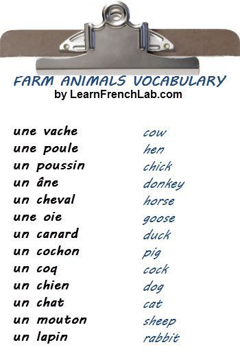 free audio lesson learn the names of pets and farm animals in french french learn french. Black Bedroom Furniture Sets. Home Design Ideas