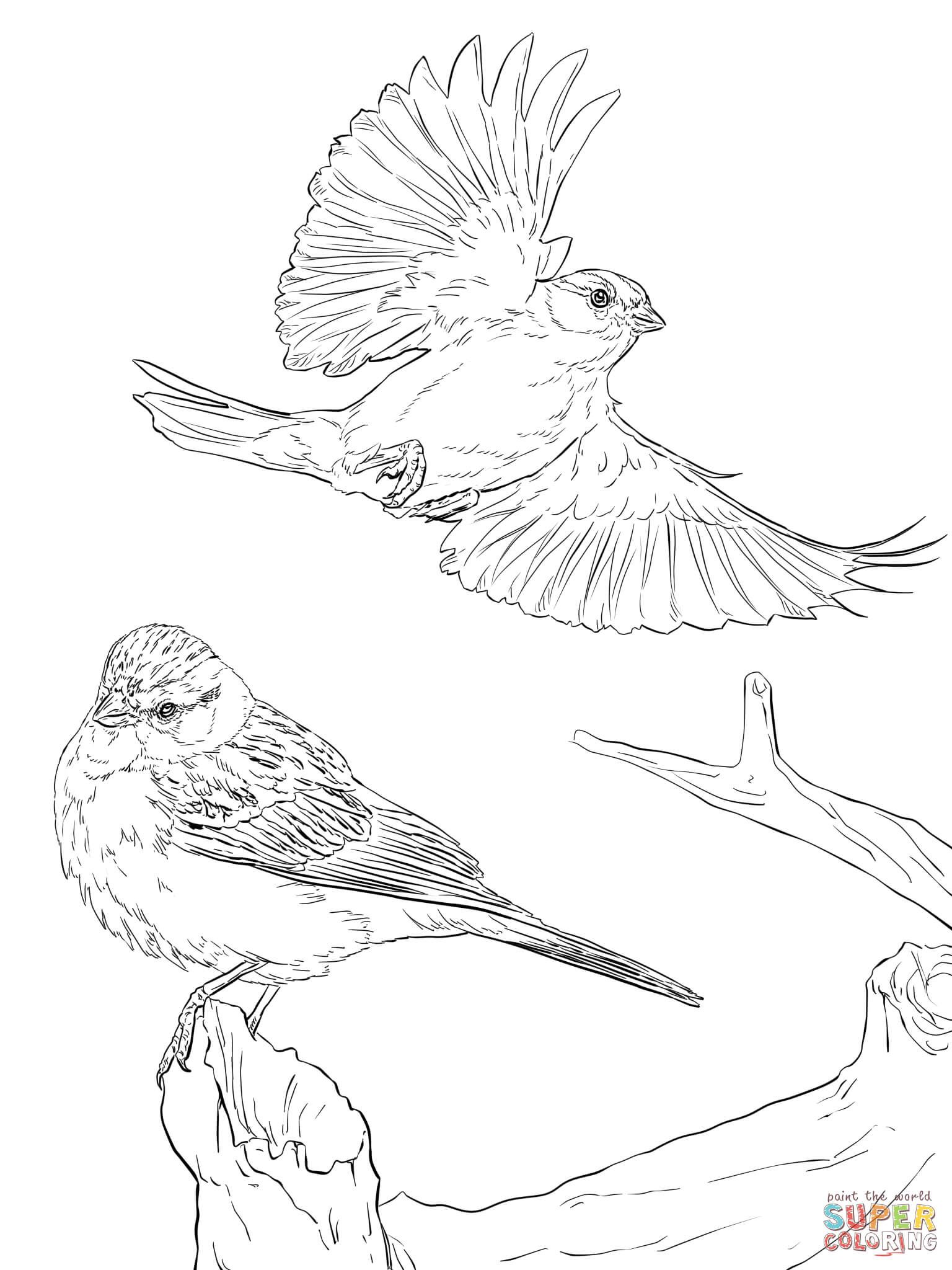 Birds Pictures For Coloring | 2048x1536