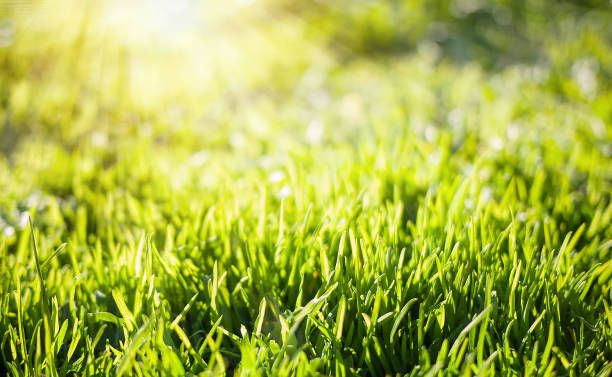 spring nature backgrounds. Spring Nature Background With Green Grass Backgrounds