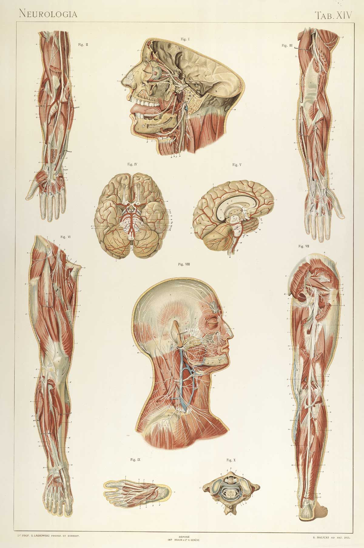 http://www.nlm.nih.gov/exhibition/historicalanatomies/Images ...