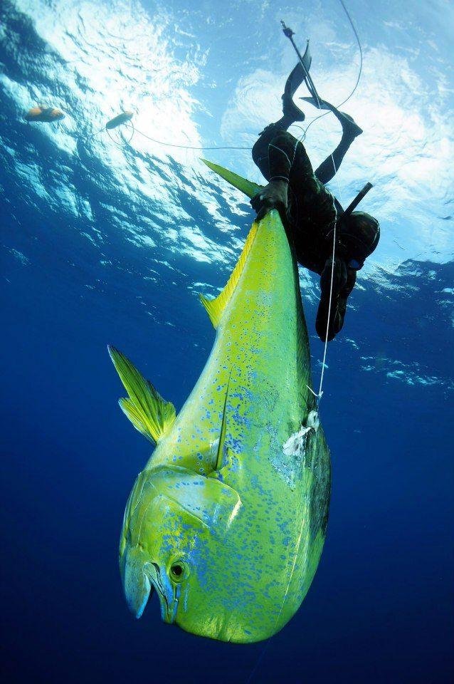 Spearfishing In Punta Mita Riviera Nayarit Is Really Something Special Sea Fishing Deep Sea Fishing Saltwater Fishing