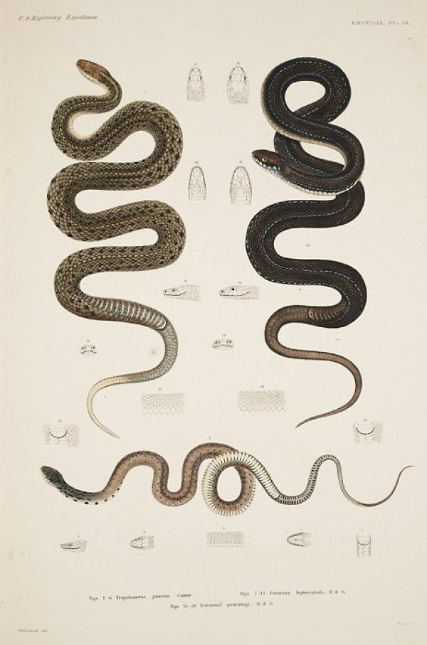 antigua serpiente: Las serpientes, ejemplo del vintage en Diseño ...
