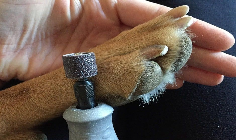 20+ Best Dog Nail Grinders Reviews® [Updated 2020] & Buyer Guide | Dog nails,  Best dogs, Dog nail clippers