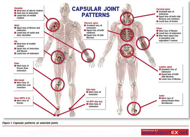 Capsular patterns at selected joints fisioterapia y msculos capsular pattern of all joints recent photos the commons getty collection galleries world map app gumiabroncs Choice Image