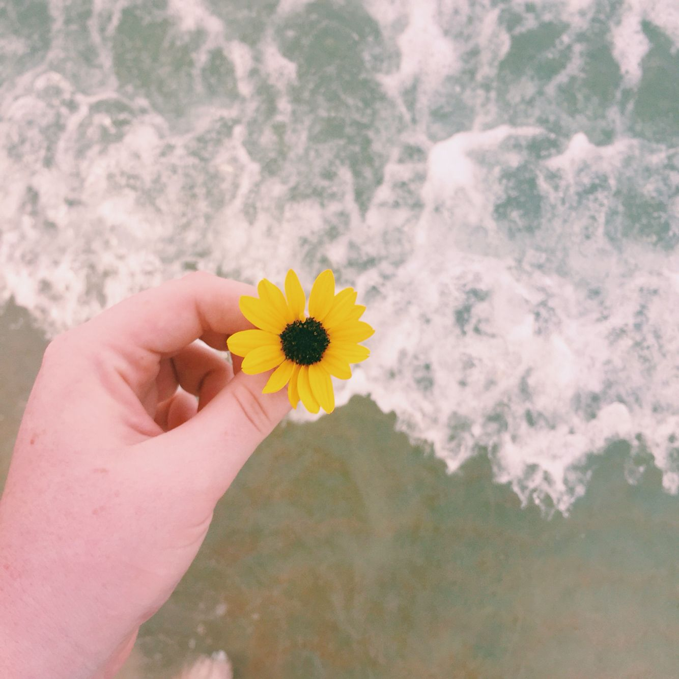 Photo by Anna Markell |I killed a flower for this picture||#hardcoreartsy| Instagram_inspiration_ideas_artsy_tumblr_photography_VSCO_beach_flower_ocean_hand_water_florida_iphone 6