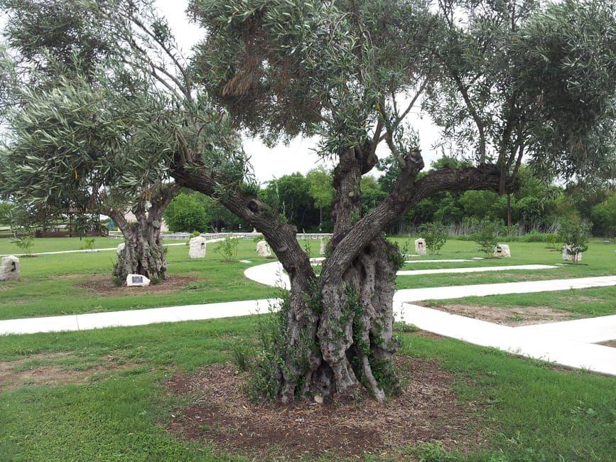 Olive Garden Style San Antonio Garden styles