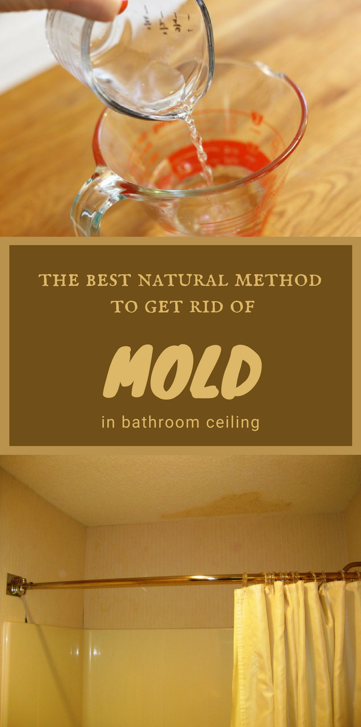 The Best Natural Method To Get Rid Of Mold In Bathroom Ceiling Mold In Bathroom Bathroom Ceiling Get Rid Of Mold