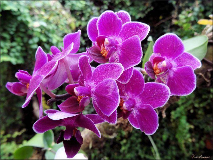 Photo d\'orchidées de la serre exotique | orchidées | Fleur ...