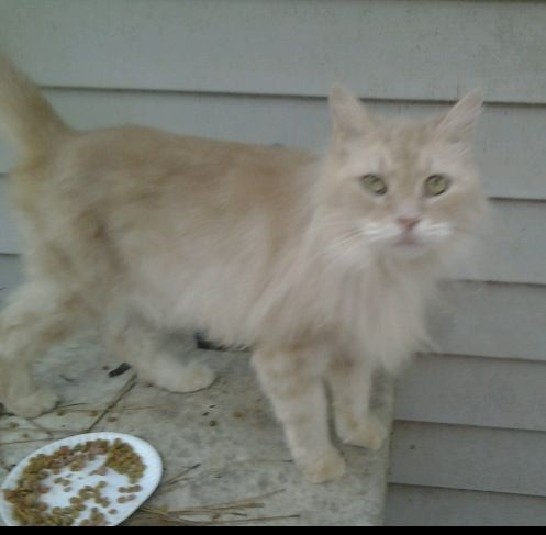 Lorax Kitty Is Scared In His Foster Home Too Many Cats And Dogs He Needs A Foster Or Forever Home Where He Can Relax And Give Love Feline Alities Cats