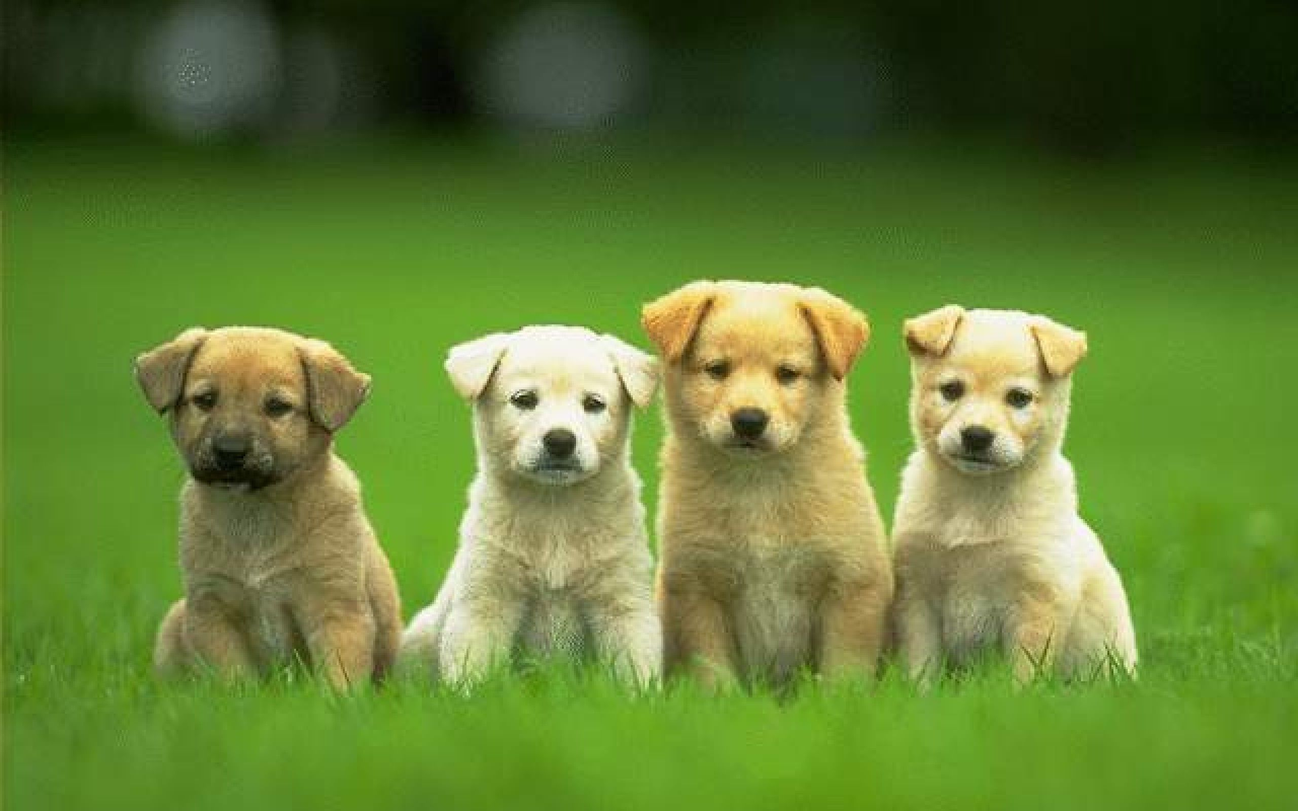 """it's not """"just a dog"""" 