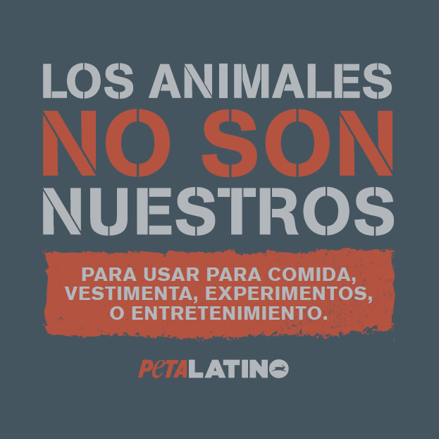 animals are not ours to abuse Reddit gives you the best of the internet in one place get a constantly updating feed of breaking news, fun stories, pics, memes, and videos just for you passionate about something niche reddit has thousands of vibrant communities with people that share your interests alternatively, find out what's trending across all of reddit on r/popular.