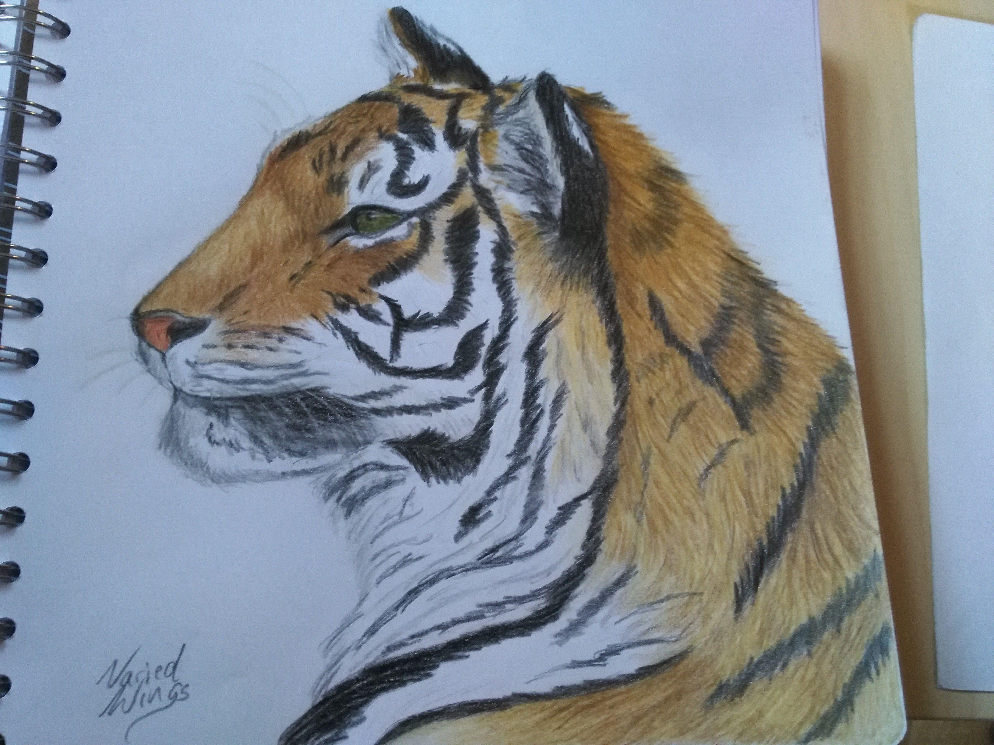 Tiger Faber Castell Polychromos Polychromos