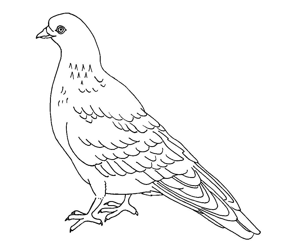 pigeon coloring pages Free Printable Pigeon Coloring Pages For Kids | coloring animals  pigeon coloring pages
