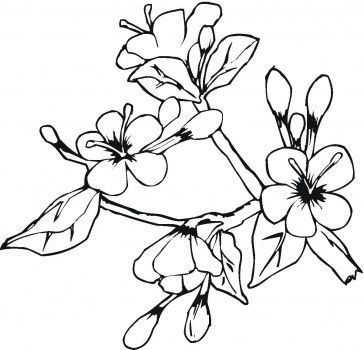 Cherry Blossom Coloring Page Flower Coloring Pages Spring