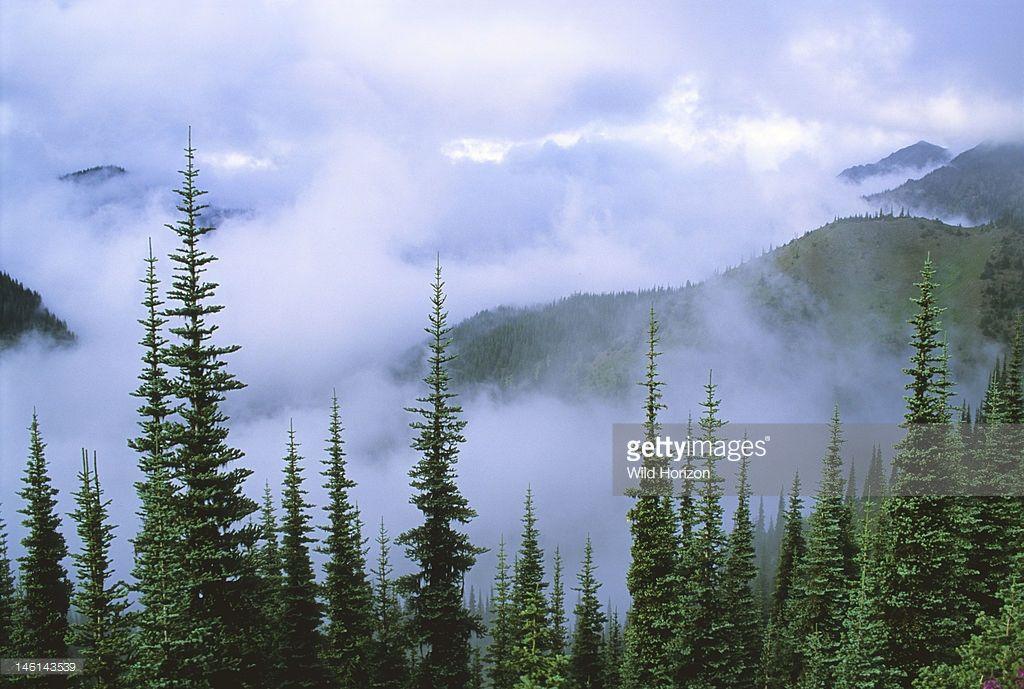 stratus-clouds-in-coast-range-subalpine-fir-forest-abies-lasiocarpa-picture-id146143539 1,024×689 pixels