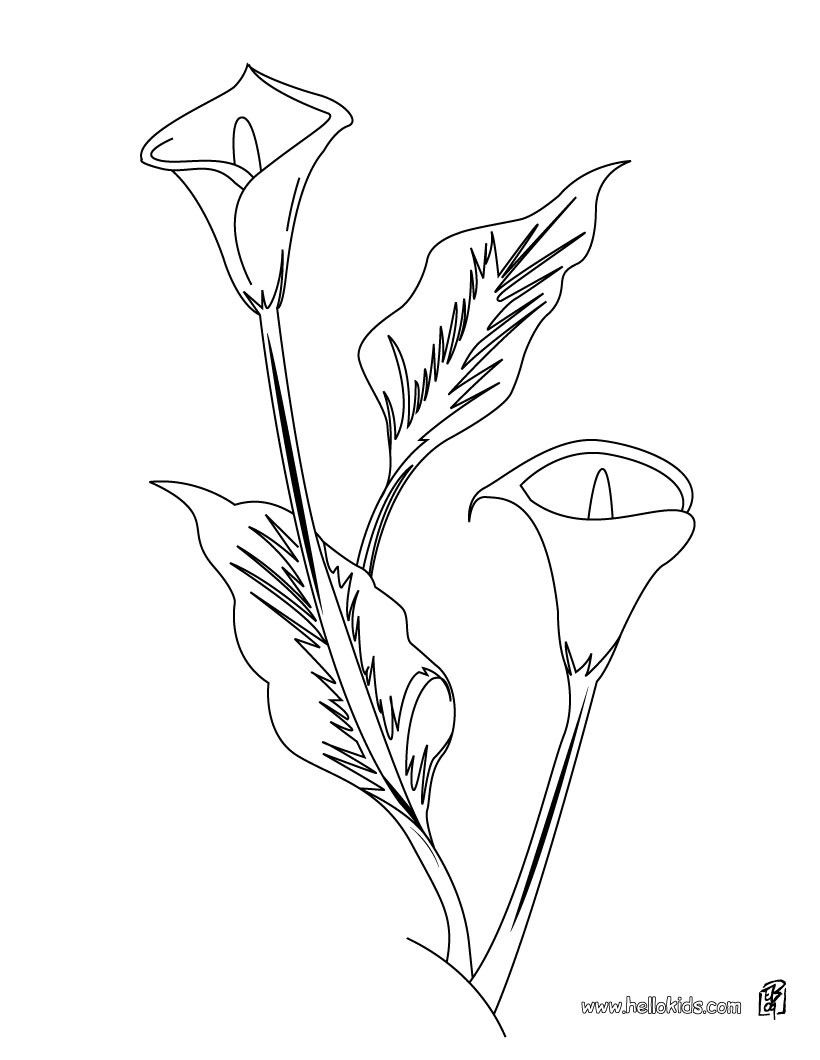 You Can Print Out This Arum Lily Coloring Page And Color It With Your Kids Enjoy Perfect Sheet For More Content On Hellokids