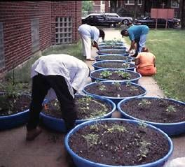 Kid s wading pools as container gardens Holds way more rain water than regular pots