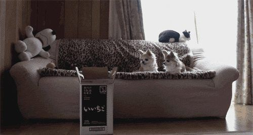 I give you: Our favorite cat gifs! - Imgur