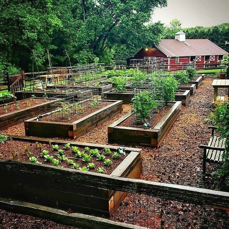 Creating Our First Vegetable Garden Advice Please: 39 Interesting Vegetable Garden Design Ideas For Your
