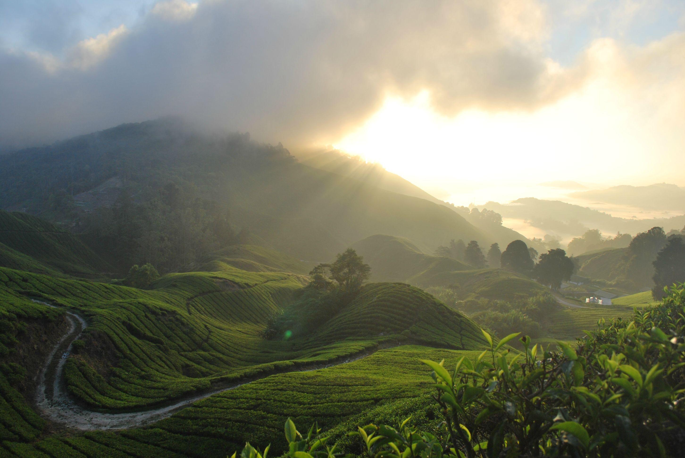 Unedited sunrise in the Cameron Highlands of Malaysia [OC] [3872 x 2592]