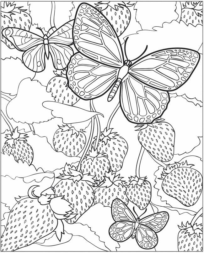 Butterfly over strawberry coloring page coloring pages for Beautiful butterfly coloring pages
