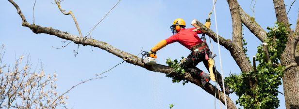 Des pistes pour diversifier l'approvisionnement des chaufferies bois