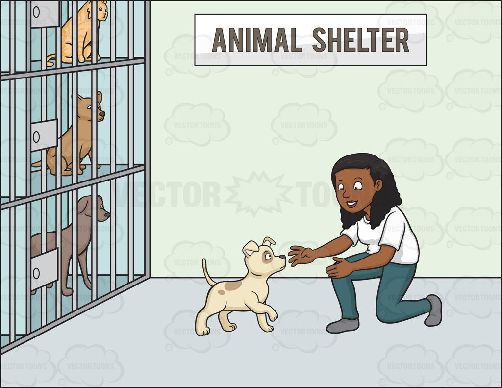 A Black Woman Volunteer In An Animal Shelter Animal Shelter Shelter Animals