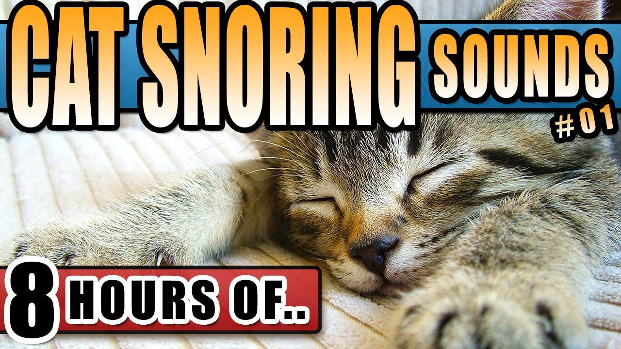 Cat Snoring Loudly Cat Sounds Kitty Sounds To Make A Cat Happy Attract Cats Or Annoy Dogs Crazy Snoring Sound Sleep Cats