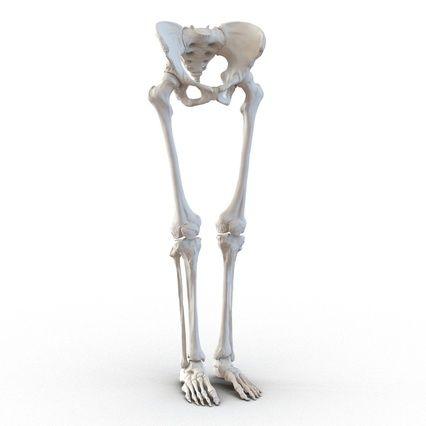 Female Lower Body Skeleton. Render 3   Anatomy   Pinterest ...