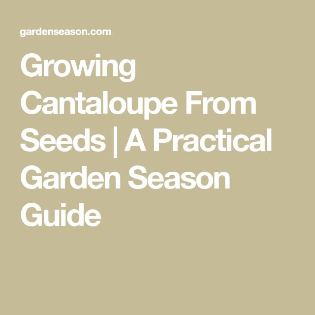 Growing Cantaloupe From Seeds A Practical Garden Season 400 x 300