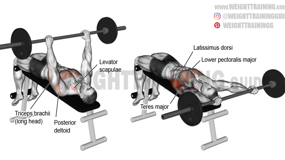 Flat Bench Hyperextension Instructions And Video Weight Training Guide Chest Workouts Face Pull Exercise Workout For Flat Stomach
