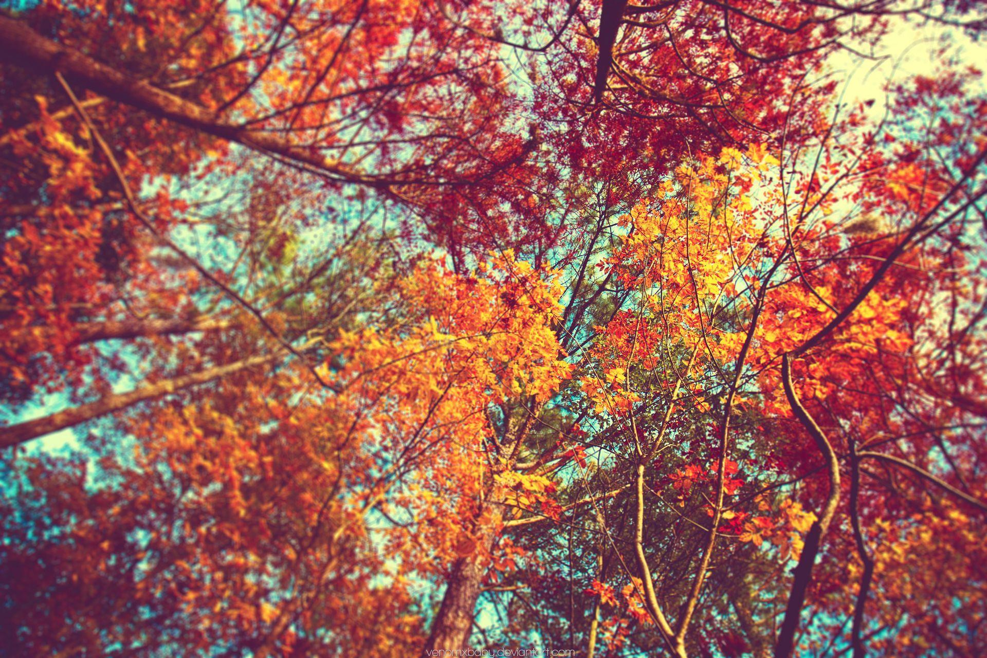 Pin By Maya On Vibe Autumn Tumblr Fall Wallpaper Tumblr Fall Wallpaper