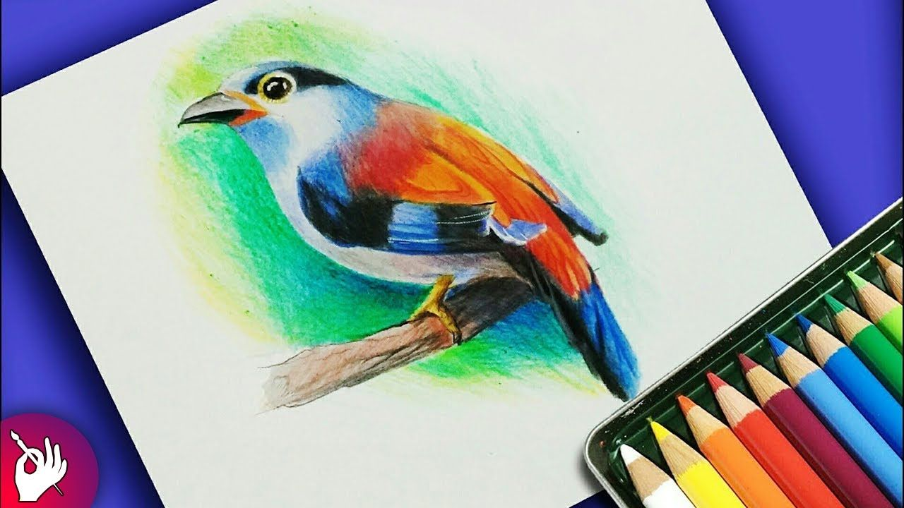 How To Draw Bird With Colour Pencil Step By Step Color Pencil Sketch Bird Drawings Color Pencil Drawing