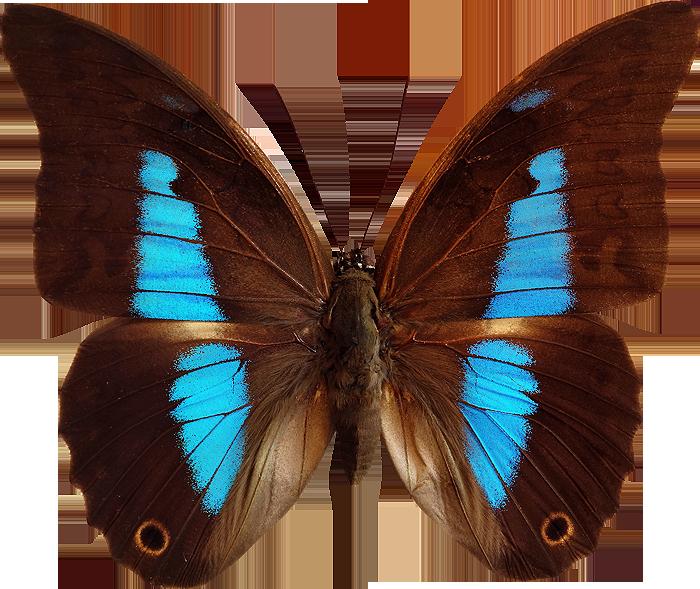 Très photo gratuite papillon détouré | Papillons | Pinterest | Photos  WL88