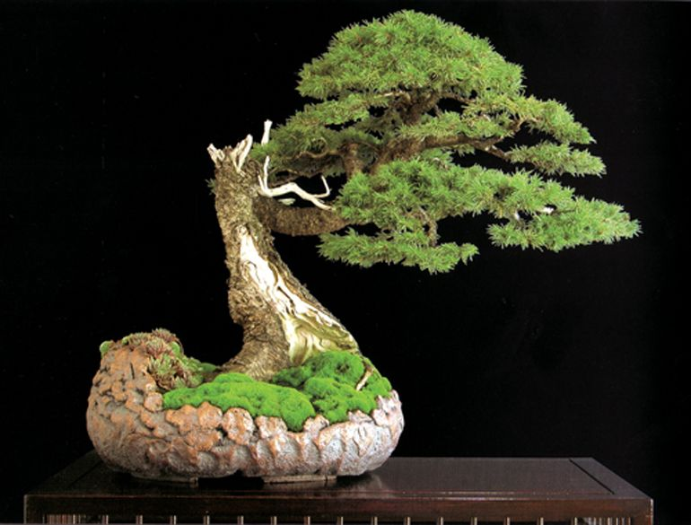 bonsai trees; absolutely gorgeous and breath-taking :) Perfection.