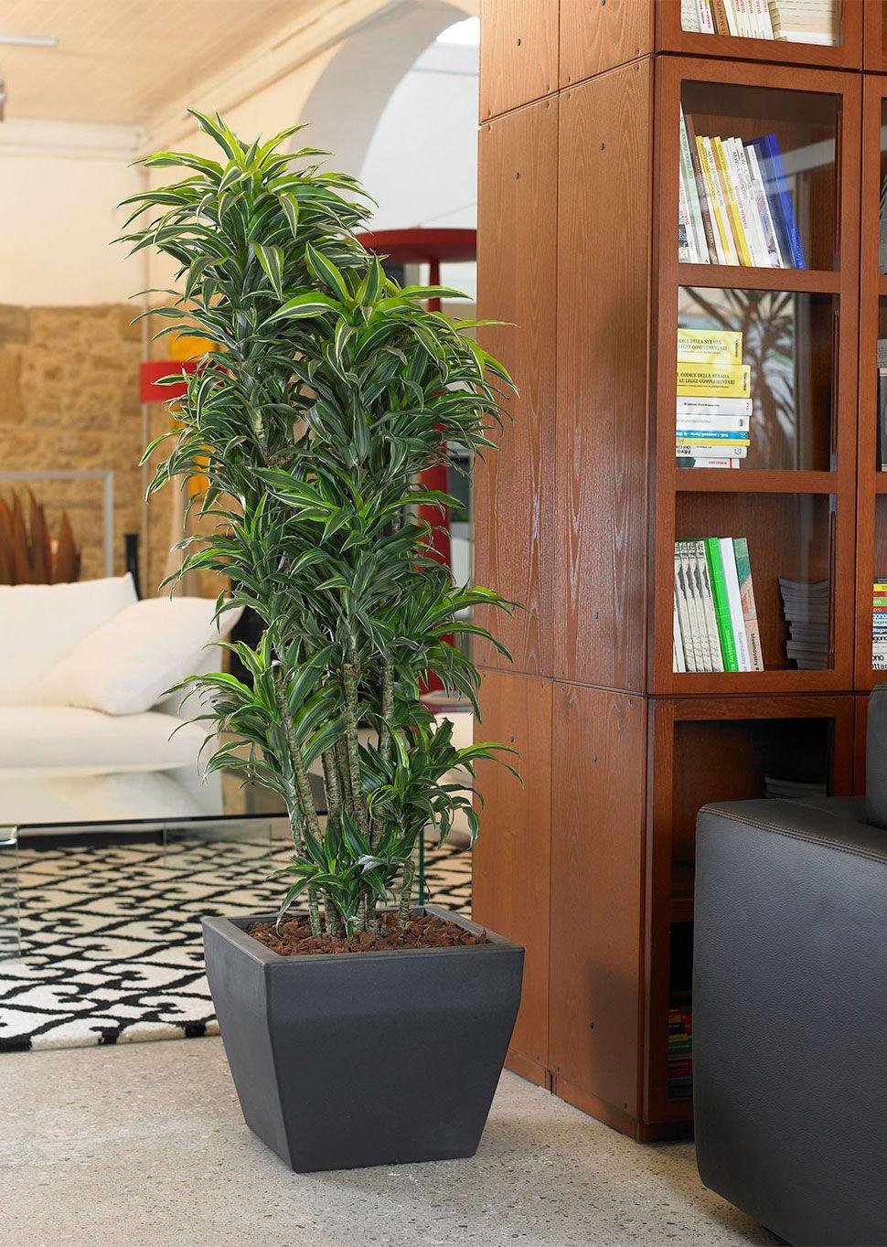 akan   Euro3plast   Piante ufficio, Piante, Piante da interno