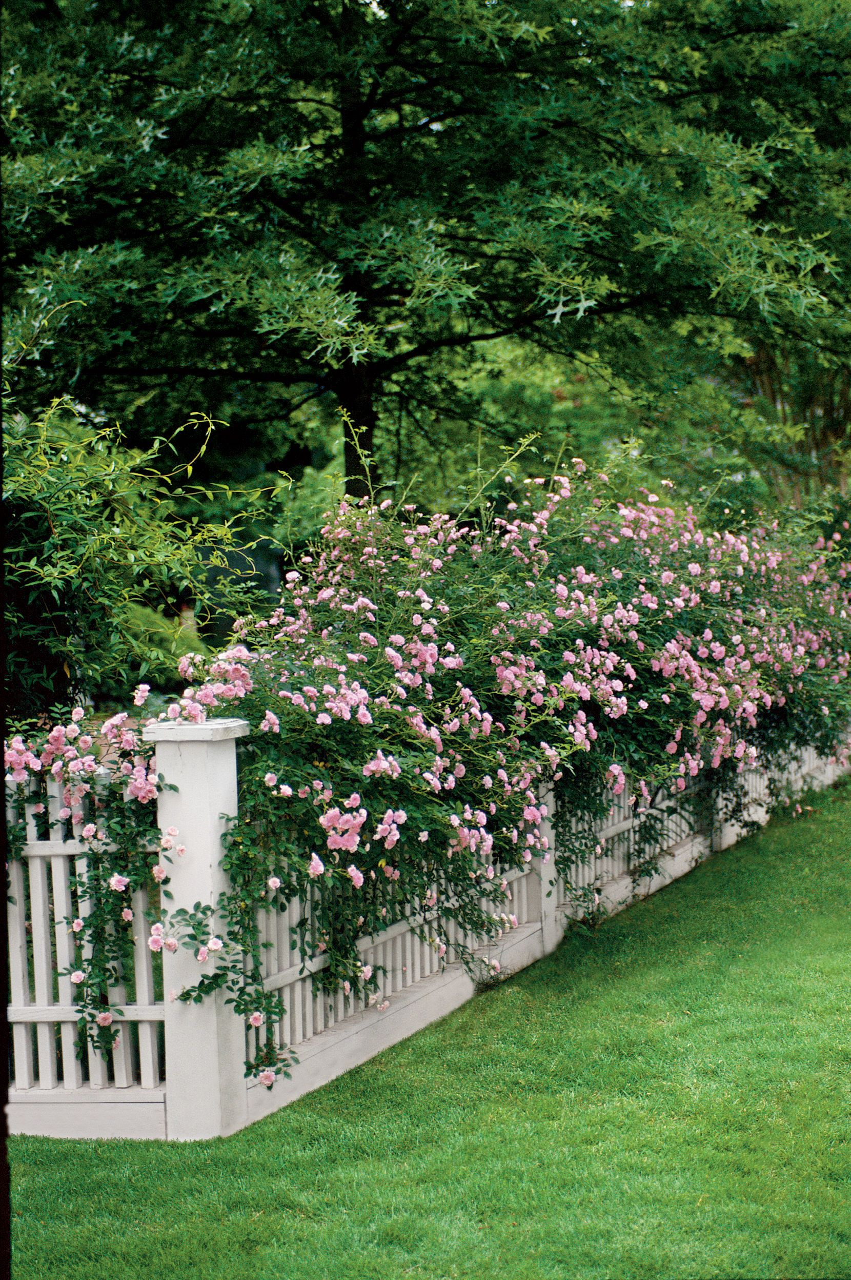 218e0dd785da453c6d4b0d386c1125fd Frais De Piscine Petit Jardin Schème
