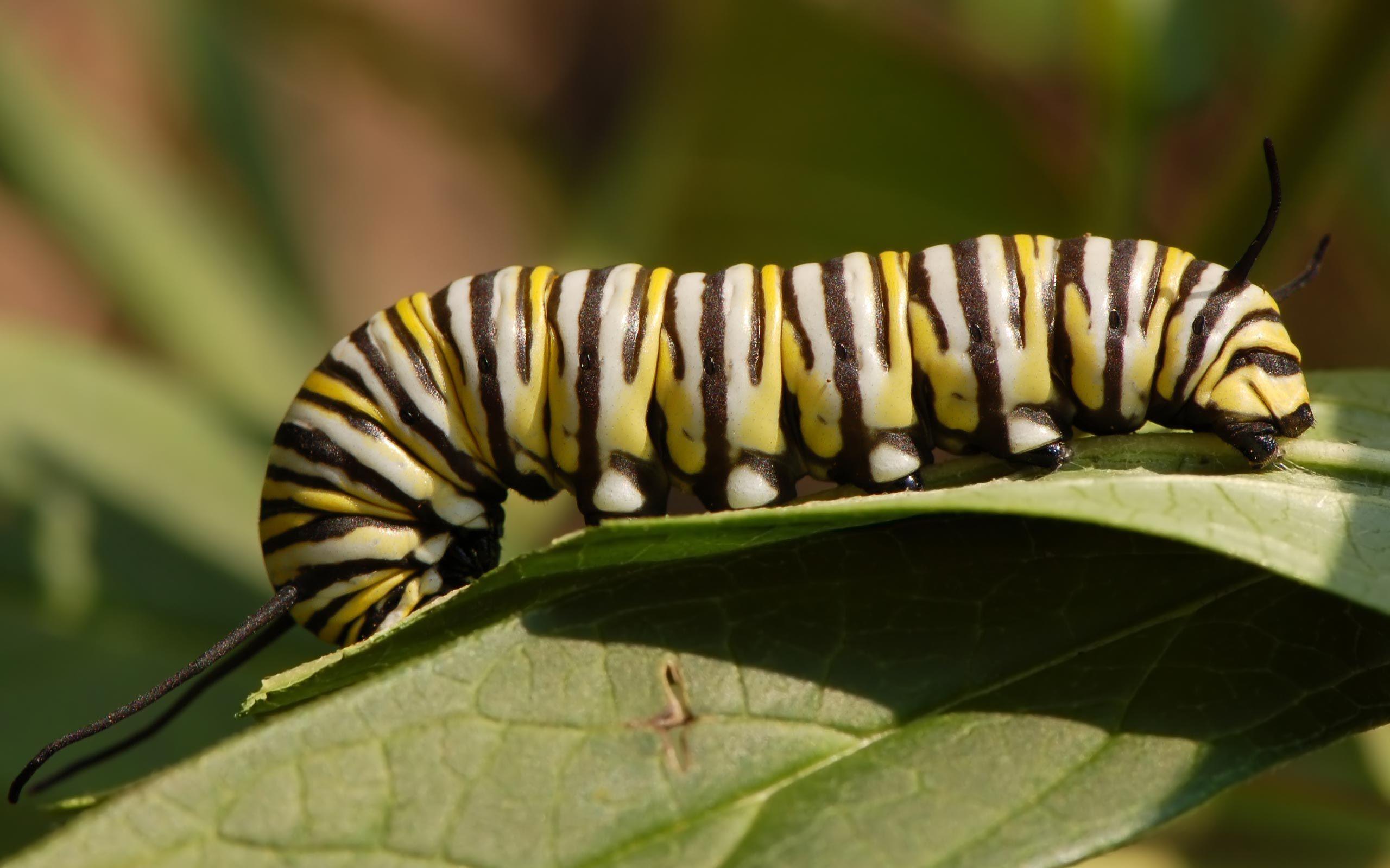 striped insect | Geometrie | Pinterest | Geometrie