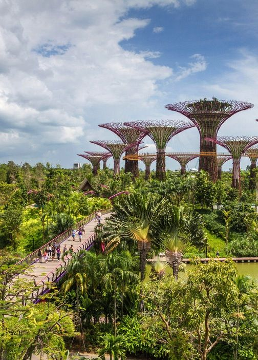 218ee79e0c3119760cae6eb526c801ee - Gardens By The Bay Dragonfly Bridge