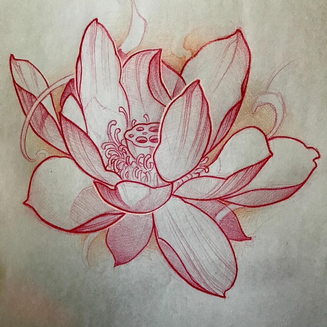 Japanese Lotus Flower Drawing Japanese Flower Tattoo Lotus Flower Tattoo Design Lotus Flower Drawing
