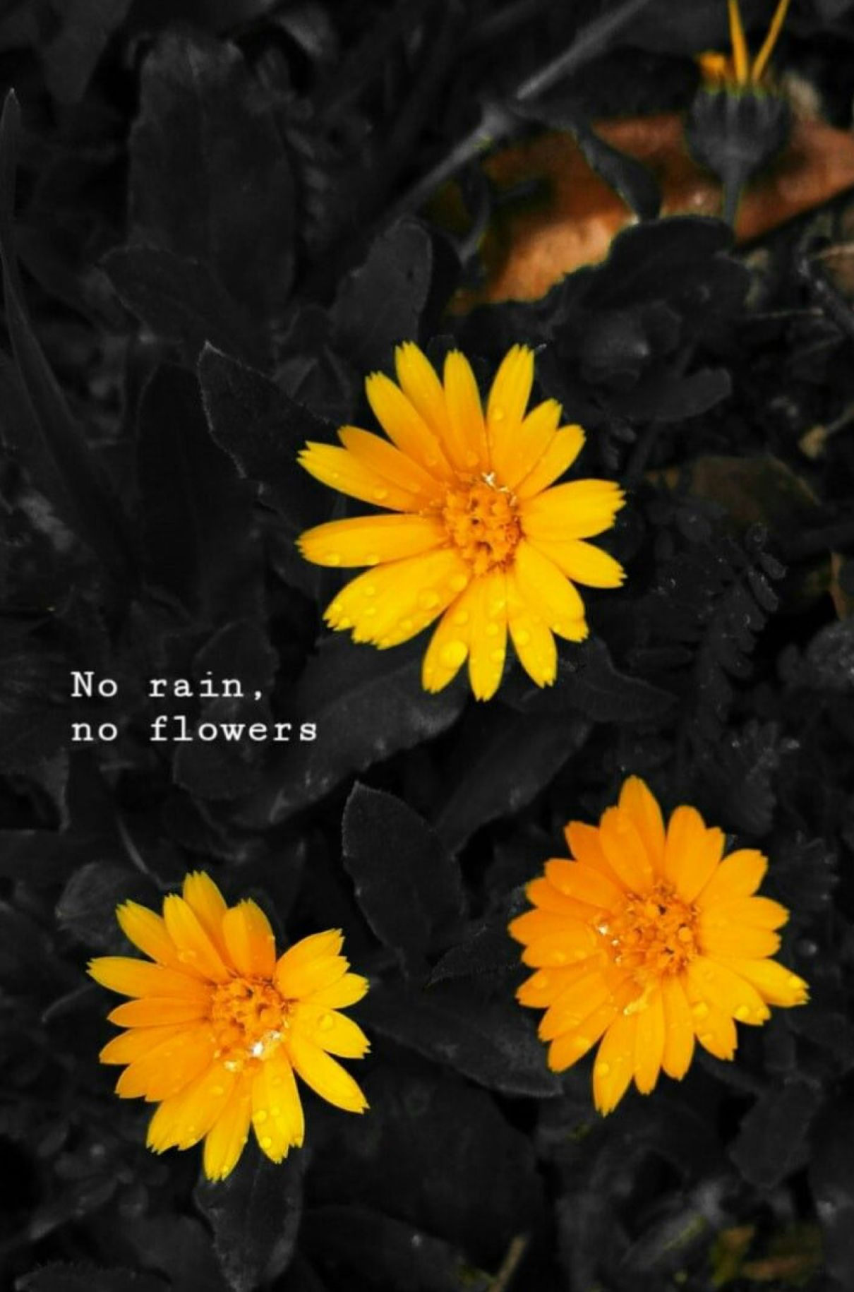 Pin by Zoe Williams on Words Flowers quotes tumblr