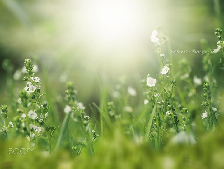 White tiny flowers pinterest photos flower and by white tiny flowers mightylinksfo