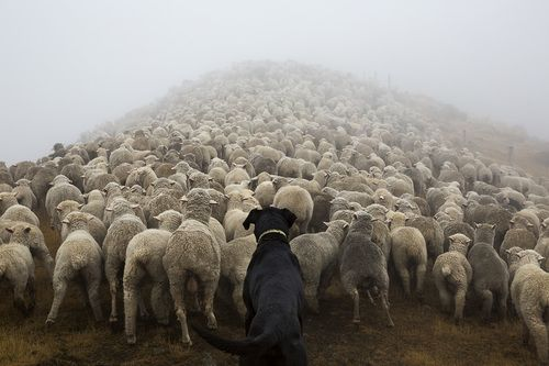 HAVE YOU EVER SEEN A DOG WORK? ANDREW FLADEBOE'S PICTURES CAPTURE IT ALL.
