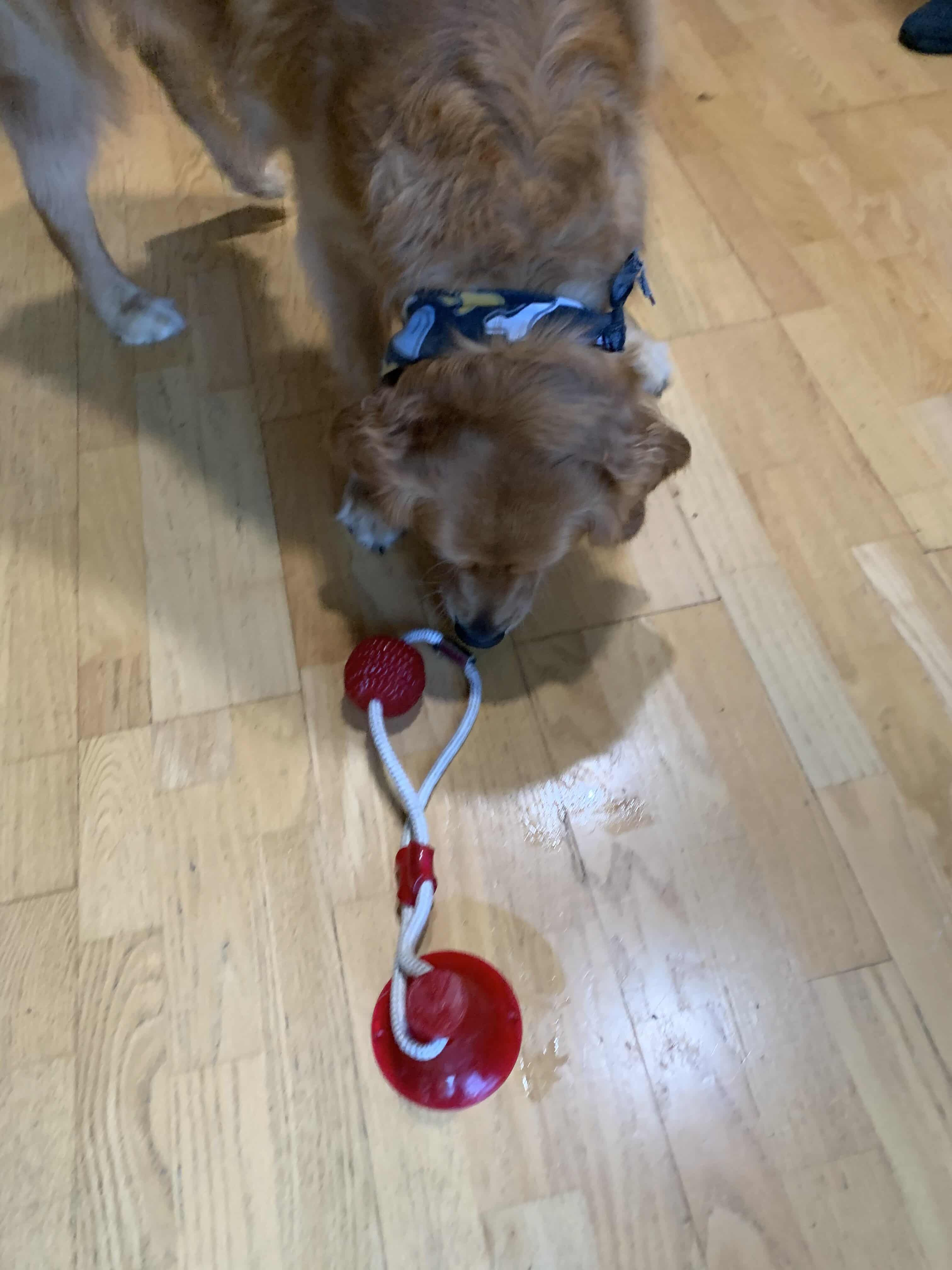 Pin On Chew Toys For Dogs