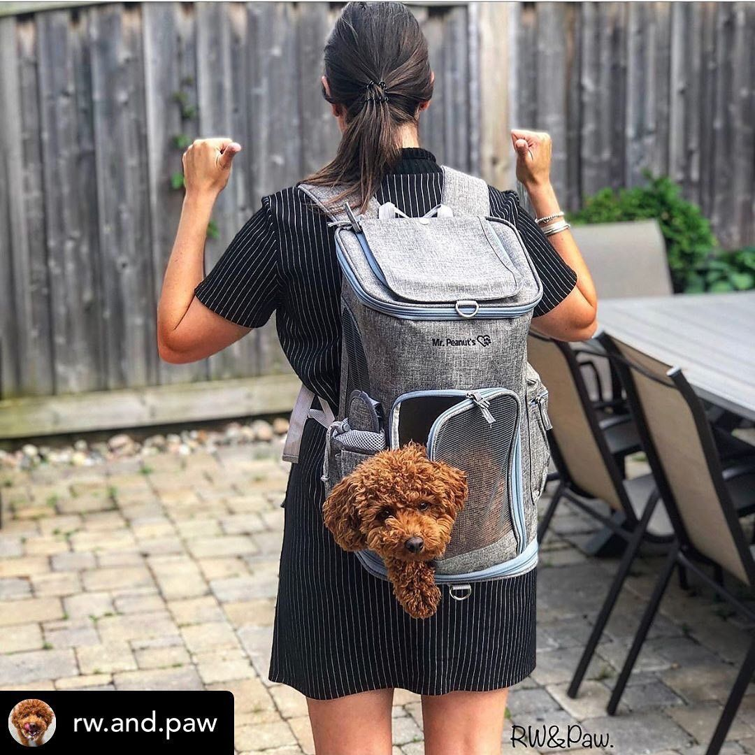Mr Peanut S Original Backpack Pet Carrier For Smaller Cats And Dogs Pet Carriers Airline Approved Pet Carrier Pets