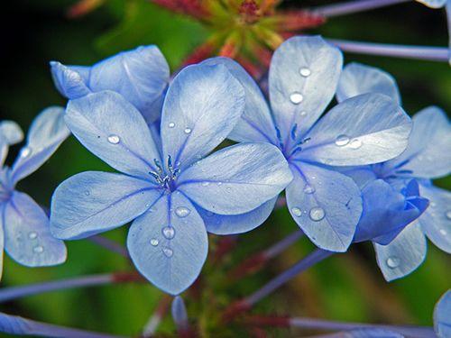 flores-arbustos-plantar-jardim-beira-mar-6.jpg (500×375)   fotos de ...